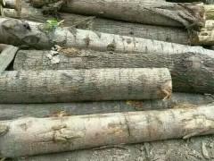 优质白杨木原木批发