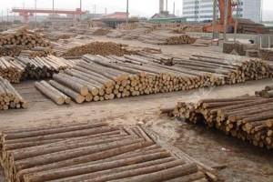 京口打造国家级木材基地和中心