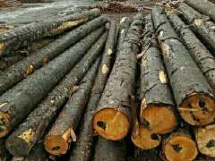 优质落叶松原木材批发