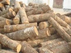 优质杂木批发
