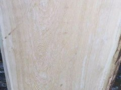 珊瑚橡木原木