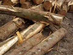 中美洲香柏木(桧木)