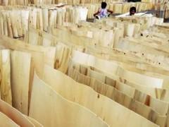 畅销款桉木薄木实木片