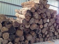 墨西哥黄金檀木材 进口黄金檀原木 名贵进口虎斑檀原木