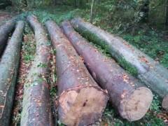 精品进口木材 榉木原木 木材加工 建筑材批发