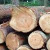 优质冷杉原木板材批发