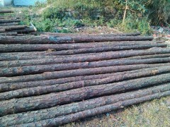林厂直售优质湿地松原木湿地松木桩