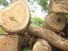 热销供应非洲柚木原木板材方料 园林建设 实木甲板木材原材