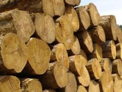 生产供应非洲柚木原木木板材 缅甸柚木板材 柚木地板坯料