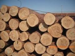 原木 俄罗斯樟子松原木 进口无节樟子松实木 批发