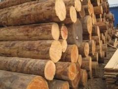 原木 俄罗斯白松原木 进口白松实木 白实木用料批发