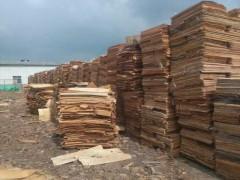 精品胶合板首选用料 旋切松木单板 厂家直供