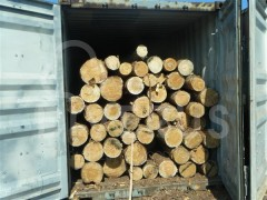 批发白俄罗斯樟子松原木 径级12-24,均径18+