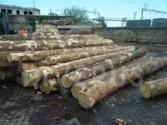 白俄罗斯樟子松原木 长度3.8+10cm 木材价格料