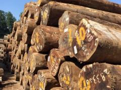 优质花梨木 进口南美花梨木 家具 佛珠 精选材 质优价廉