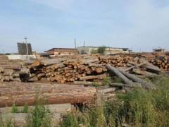 原木 俄罗斯樟子松原木 进口无节樟子松实木 樟松实木用料批发