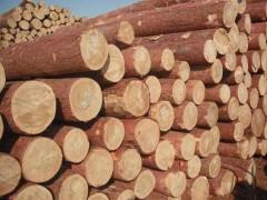 樟子松,落叶松,杉木,板材,方料,建筑模板各种进口木材