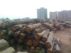 直销花梨木原木 木方  花梨木木皮 花梨木板材