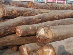 厂家直供原木 旱黄杨木、柘木、核桃木 规格齐全 质量保证