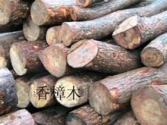 瑞祥木业基地常年供应原木 香樟木 质量优 保木材质量