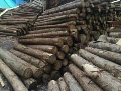 厂家直销松木 杉木 桉木 樟木 普通杂木 长期大量批发