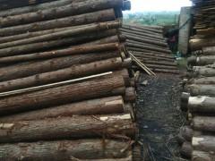 一手货源 抓也批发松木 杉木 桉木 樟木等杂木 量大从优
