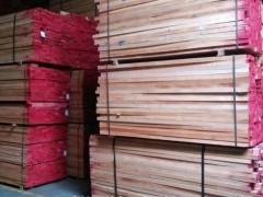 供应优质欧洲榉木原木 各种尺寸板材 方材