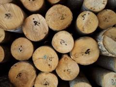 可定制 各种规格 松木 杨木 木材加工
