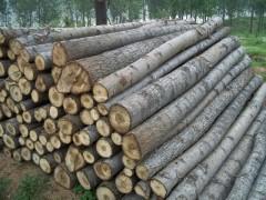专业批发 优质 硬、软 杂木 质量保证 欢迎定制