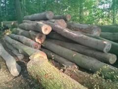 进口木材加工、欧美原木、可定制加工不同建筑用材 实木板材