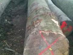 进口木材加工、欧美木材、原木 可定加工不同建筑用材