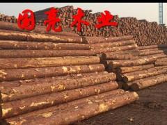 松木桩落叶松白松打桩木煤矿坑木檩条防汛木桩批发