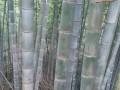 森宝竹木制品有限公司-产品图片
