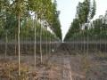 盛森风景园林设计绿化有限公司—产品图片