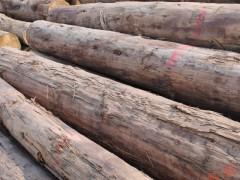 长期供应 白松原木板材 建筑 桥梁 首选用料