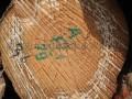 瑞昌市华中国际木业有限公司—产品图片