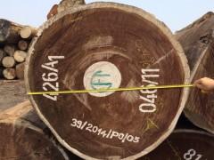 供应大直径花旗松原木 弹性坚韧抗弯型可加工建筑用材厂家直销