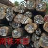 大量供应 苏里南铁木豆 甘蓝豆  大理石豆 瓦泰豆 依贝