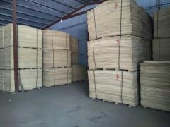 精品杨木皮子 1.7.8.9,四拼的 长期大量供应