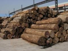 进口东亚木材缅甸柚木 原木 大量供应 质优价廉