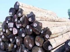 昌黎永锋进口木材   原木缅甸进口木材精品缅甸柚木大口径