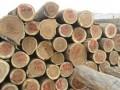 河北昌黎永锋进口木材科技发展有限公司-产品图片