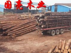园林古建松木桩煤矿坑木落叶松樟子松白松小杆批发