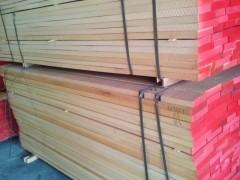 可定制 各种规格 榉木板材 榉木原木 大量批发