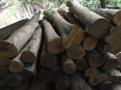 长期大量供应优质金丝楠原材料 新料 陈料 老房料 阴沉木