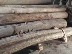 精品金丝楠原材料 新料 陈料 老房料 阴沉木 长期大量供应