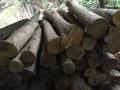 皇木金丝楠木-产品图片