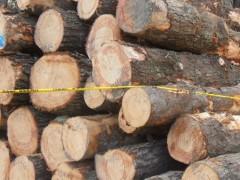 一手货源 方木锯材和杉木、松木、杂木等原木  真材实料