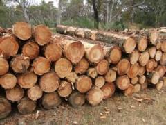 厂家大量供应 松木杂木规格齐全 货源充足 可加工定制木板