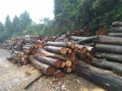 厂家大量供应 松木 杂木 规格齐全 货源充足
